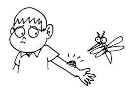 Kết quả hình ảnh cho bệnh sốt xuất huyết